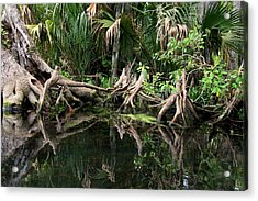 Acrylic Print featuring the photograph Cypress Swamp  by Barbara Bowen