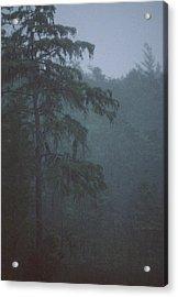 Cypress Swamp Acrylic Print by Kimberly Mohlenhoff