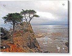 Cypress Tree At Pebble Beach Acrylic Print