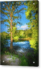 Cypress Tree By The River Acrylic Print by Marvin Spates