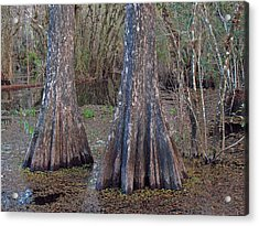 Cypress Trees At Duck Pond Acrylic Print by Juergen Roth