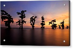 Acrylic Print featuring the photograph Cypress Trees by Evgeny Vasenev