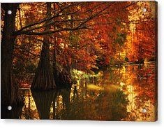 Cypress Trees In The Misy Morning Acrylic Print by Iris Greenwell