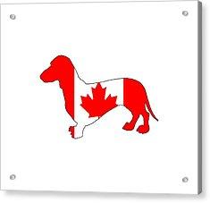 Dachshund Canada Acrylic Print