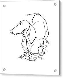 Dachshund Gesture Sketch Acrylic Print