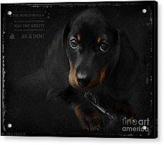 Dachshund - Puppy Love Acrylic Print by iMia dEsigN