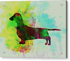 Dachshund Watercolor Acrylic Print by Naxart Studio