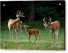 Acrylic Print featuring the photograph Daddy Day Care by Andrea Silies