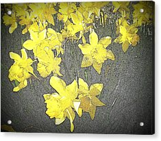 Daffodil 2-pencil Etch Acrylic Print by Nick Kloepping