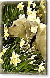 Daffodil Dog Acrylic Print