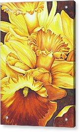 Daffodil Drama Acrylic Print
