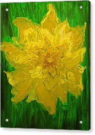 Acrylic Print featuring the painting Daffodil by Evelina Popilian