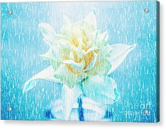 Daffodil Flower In Rain. Digital Art Acrylic Print