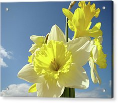 Daffodil Flowers Artwork Floral Photography Spring Flower Art Prints Acrylic Print by Baslee Troutman