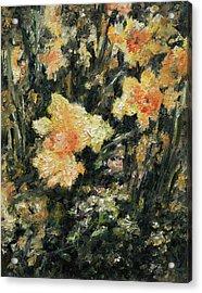 Daffodil Acrylic Print by Rachel Christine Nowicki