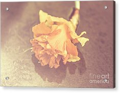 Daffodil Reflections  Acrylic Print by Jorgo Photography - Wall Art Gallery