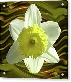 Daffodil Swirl Acrylic Print
