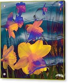 Daffodils #1 Acrylic Print