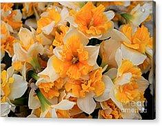 Daffodils Carpet Acrylic Print by Valia Bradshaw