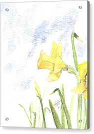 Daffodils Acrylic Print by Denise   Hoff