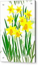 Daffodils Drawing Acrylic Print