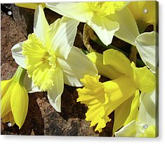 Daffodils Flower Bouquet Rustic Rock Art Daffodil Flowers Artwork Spring Floral Art Acrylic Print by Baslee Troutman