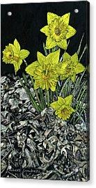 Daffodils Acrylic Print by Robert Goudreau
