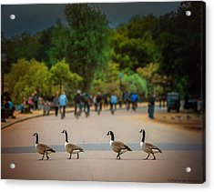 Daffy Road Acrylic Print by Wallaroo Images