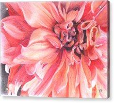 Dahlia 1 Acrylic Print