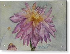 Acrylic Print featuring the painting Dahlia At Eastport Me by Donna Walsh