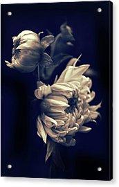 Dahlia Duet Acrylic Print by Jessica Jenney