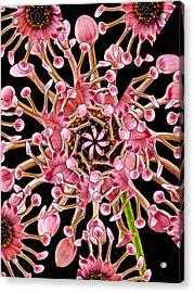 Dahlia Kaleidoscope By Jean Noren Acrylic Print by Jean Noren