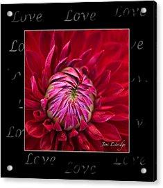 Dahlia Of Love Acrylic Print by Joni Eskridge