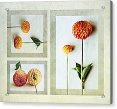 Dahlia Trip Acrylic Print