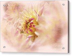 Dahlia2 Acrylic Print