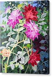 Dahlias 4 Acrylic Print