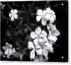 Acrylic Print featuring the photograph Dainty Blooms - Black And White Photograph by Ann Powell