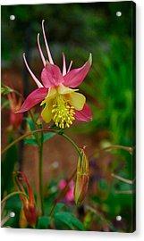 Dainty Flower Acrylic Print by Amber Lea Starfire