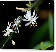 Acrylic Print featuring the photograph Dainty White by Lora Lee Chapman