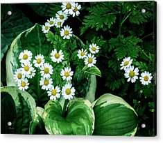 Daisies And Hosta In Colour Acrylic Print
