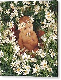 Daisies Acrylic Print by Anne Geddes
