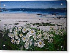 Daisies Connemara Ireland Acrylic Print