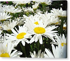 Daisies Floral Landscape Art Prints Daisy Flowers Baslee Troutman Acrylic Print by Baslee Troutman