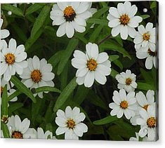 Acrylic Print featuring the photograph Daisies by Frank Wickham
