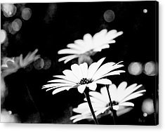 Daisies In Black And White Acrylic Print