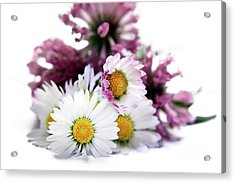 Daisies In Clover Acrylic Print by Terri Waters