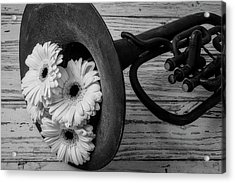 Daisies In Tuba In Black And White Acrylic Print