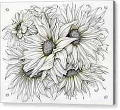 Sunflowers Pencil Acrylic Print