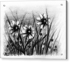 Daisies Acrylic Print by Rachel Christine Nowicki