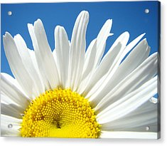Daisy Art Prints White Daisies Flowers Blue Sky Acrylic Print by Baslee Troutman